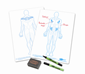Show-me Class Pack HUMAN MUSCLES Drywipe Boards